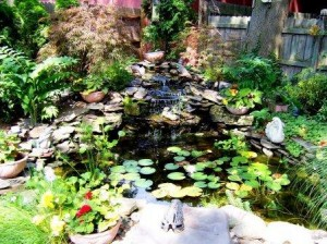 DianeMay.com-Pond in Spring-How to deal with compassion fatigue